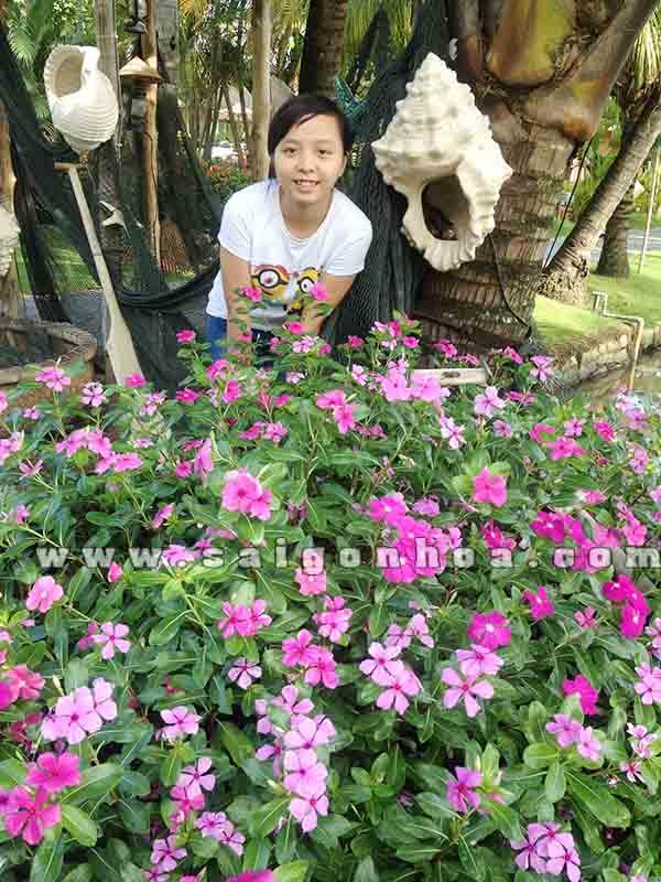 Khom Hoa Dua Can 1