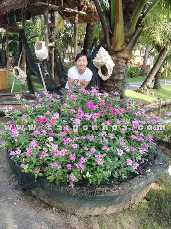 khom hoa dua can 2