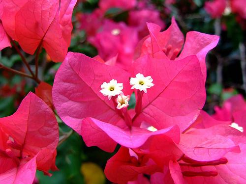 la bac cay bong giay va hoa