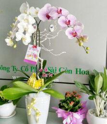 Lan Ho Diep Chau 2 Canh 1