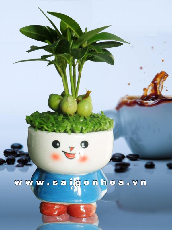 may man sakura