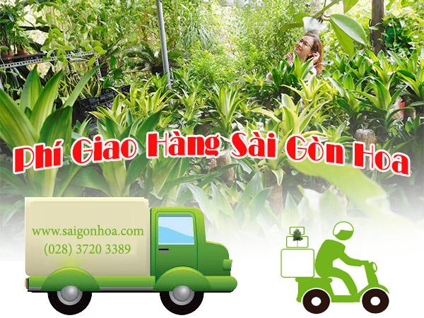 Phi Giao Hang Sai Gon Hoa