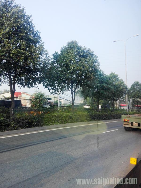 Sao Den Duong Pho