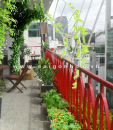 Tieu Canh Quan Cafe 01