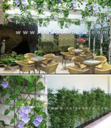 Tieu Canh Quan Cafe San Thuong