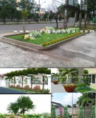 Tieu Canh Truoc Van Phong Cong Ty 1