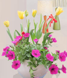 Tulip Va Da Yen Thao 1