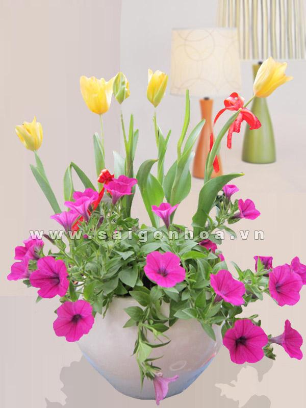 tulip va da yen thao