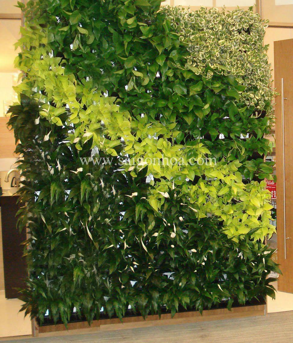 Tường cây di dộng với lan ý, trầu bà vàng, trầu bà xanh và cây cẩm thạch