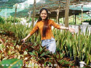 Vuon Cay Phu Quy