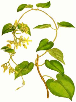 Hoa Thien Ly Ve