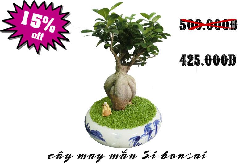 cay may man si bonsai giam gia