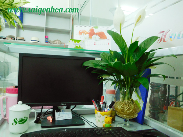 Chau Lan Y Trong Nuoc