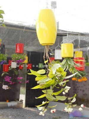 chau treo nguoc trong cay hoa