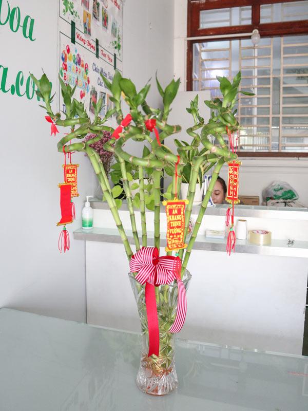 Cay Phat Loc Xoan Van Phong
