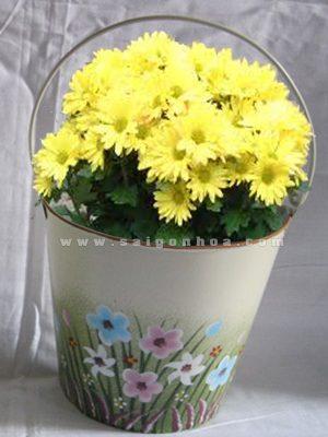 chau ap tuong trong hoa cuc