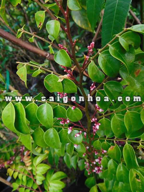 Hoa Cay Khe 1