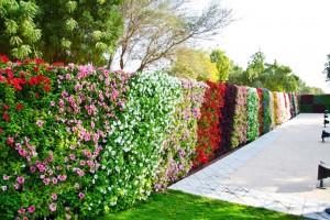 tuong cay hoa