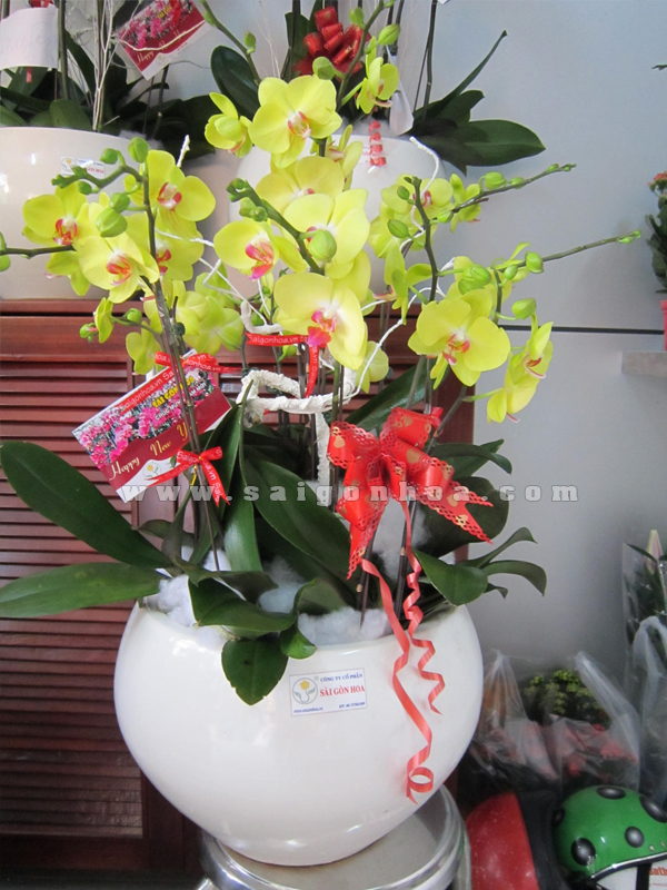 Chau Lan Ho Diep Hoa Vang
