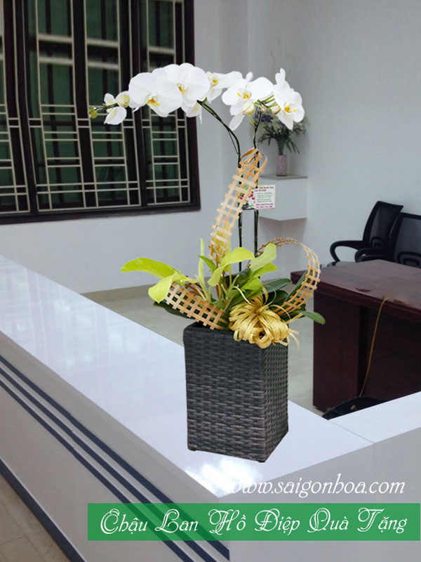 Chau Lan Ho Diep Qua Tang
