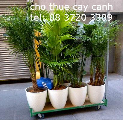 cho thue cay canh