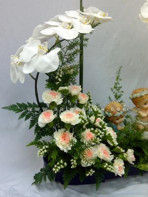 gio hoa lan ho diep trang