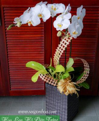 Hoa Lan Ho Diep Trang 2