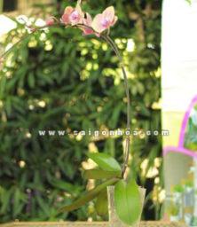 Lan Ho Diep Cam 3
