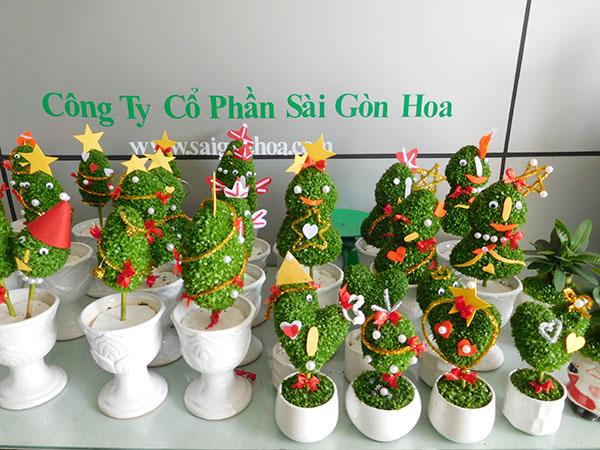 Cay May Man Tao Hinh De Thuong
