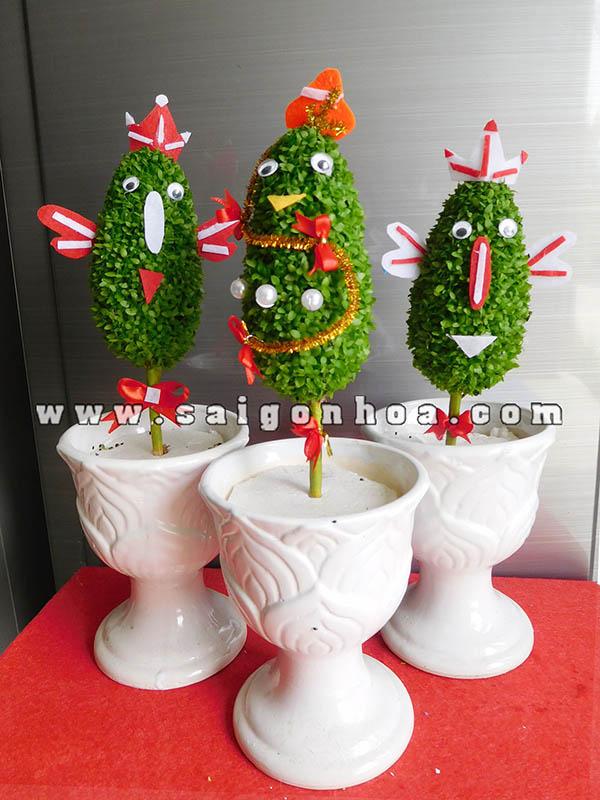 Cay May Man Thong Noel