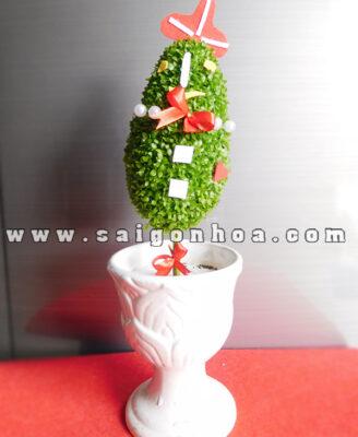 Cay May Man Trang Tri Noel