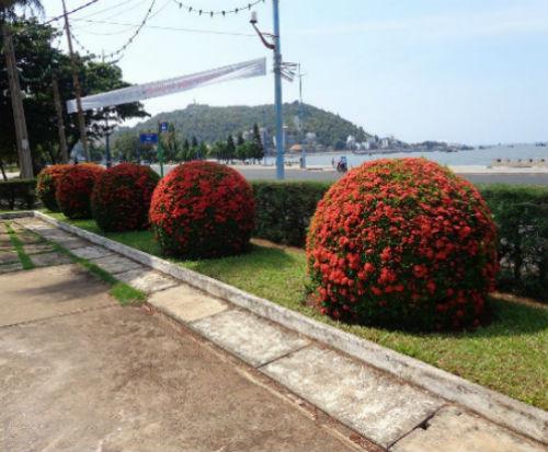 Cay Trang Thai Do Hinh Cau