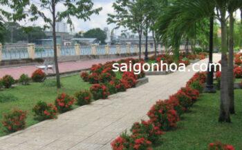 Cay Trong Vien Cay Trang