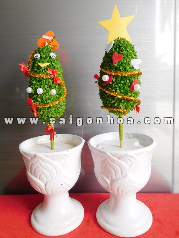 Chau Cay May Man Thong Noel