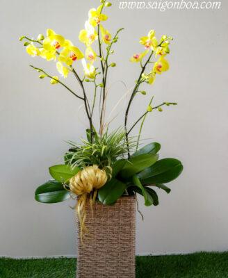 Chau Lan Ho Diep 3 Canh