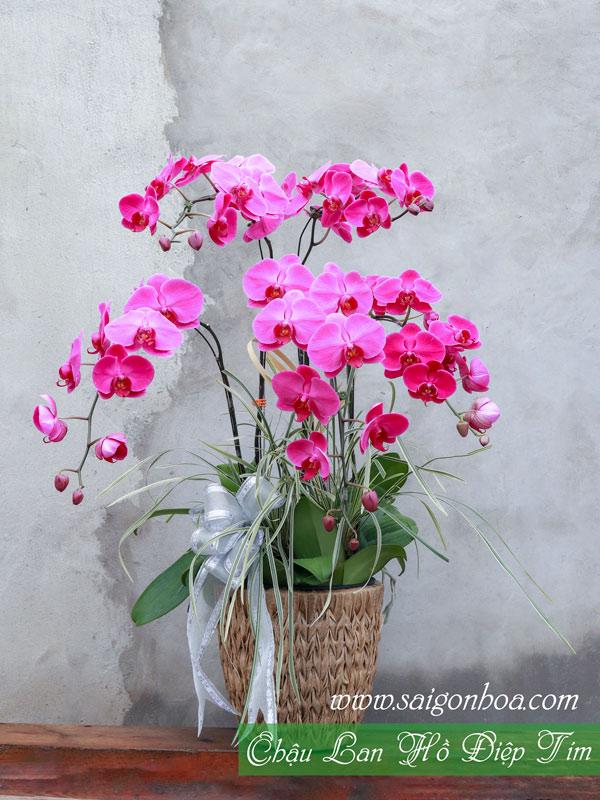 Chau Lan Ho Diep Tim