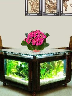 Hoa Song Doi Kep Canh Sen