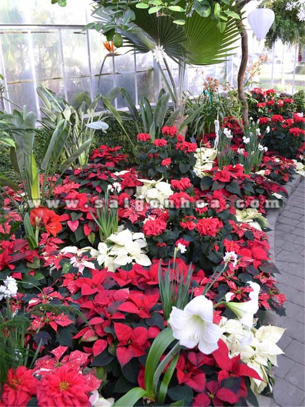 hoa trang nguyen trong cong trinh 11