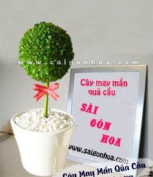 Cay May Man Qua Cau 1