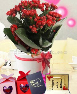 Hoa Song Doi Kep Qua Tang Le Tinh Nhan