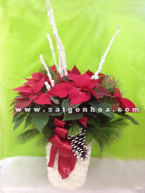 hoa trang nguen da lat