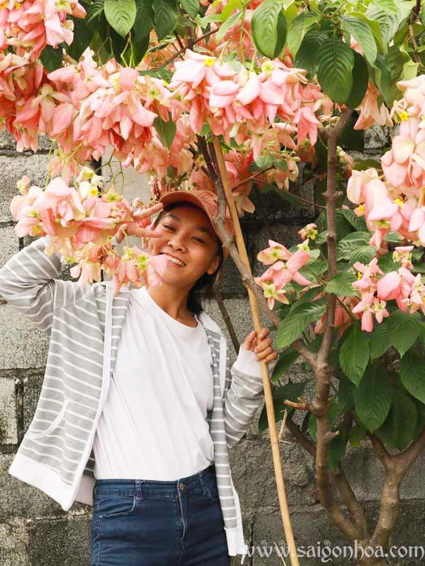Cay Buom Hong 7