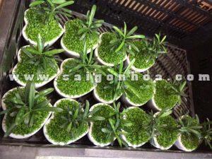 cay may man tung hanh phuc 11