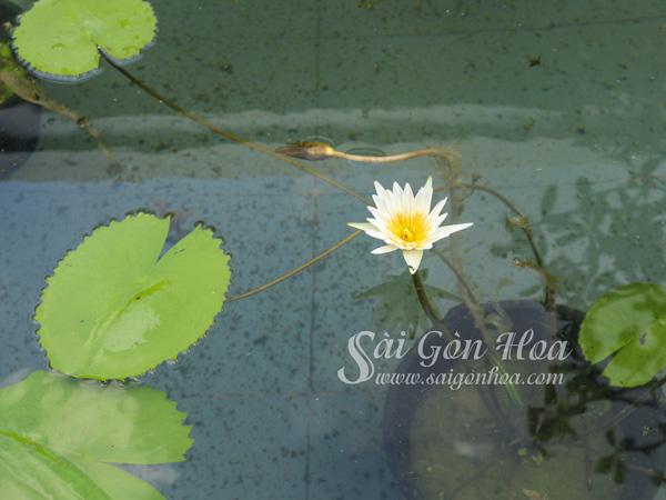 Cham Soc Cay Sung Thai Lai
