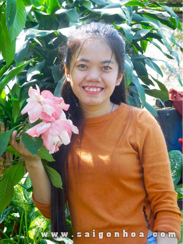 Hoa Cay Buom Hong