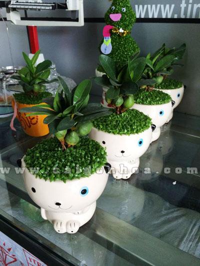Cay May Man Tai Loc Con Gau Trang 8