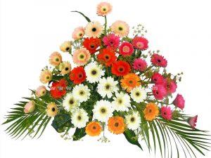 hoa cuc dong tien trang tri