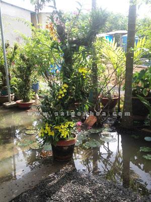 Hoa Lan Vu Nu Ghep Goc Cay