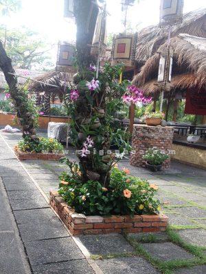 Lan Dendrobium Ghep Goc Cay