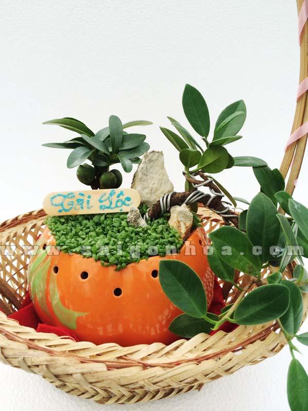 tieu canh may man tai loc bonsai tang qua tet